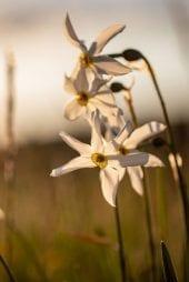 Fleurs sauvages chères au cœur du chef David Burgarella